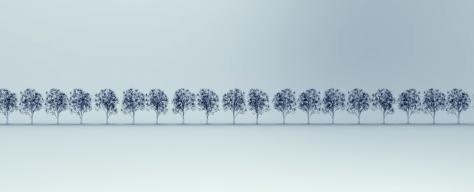 x-ray image of tree's isolated